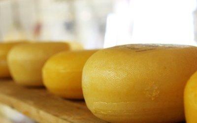 Artikel 4 cheese