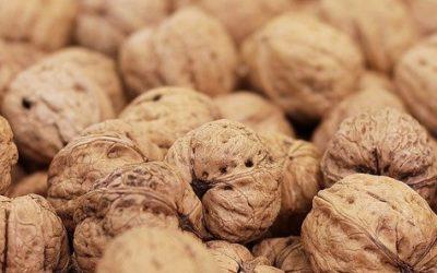 Artikel 1 walnuts
