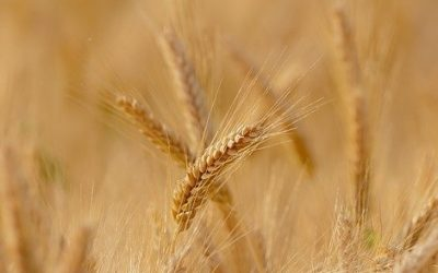 wheat Debitoren